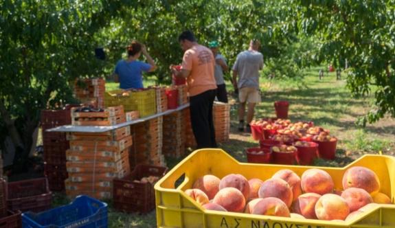 Üreticiler, meyve ihracatının bu yaz düştüğünü söyledi